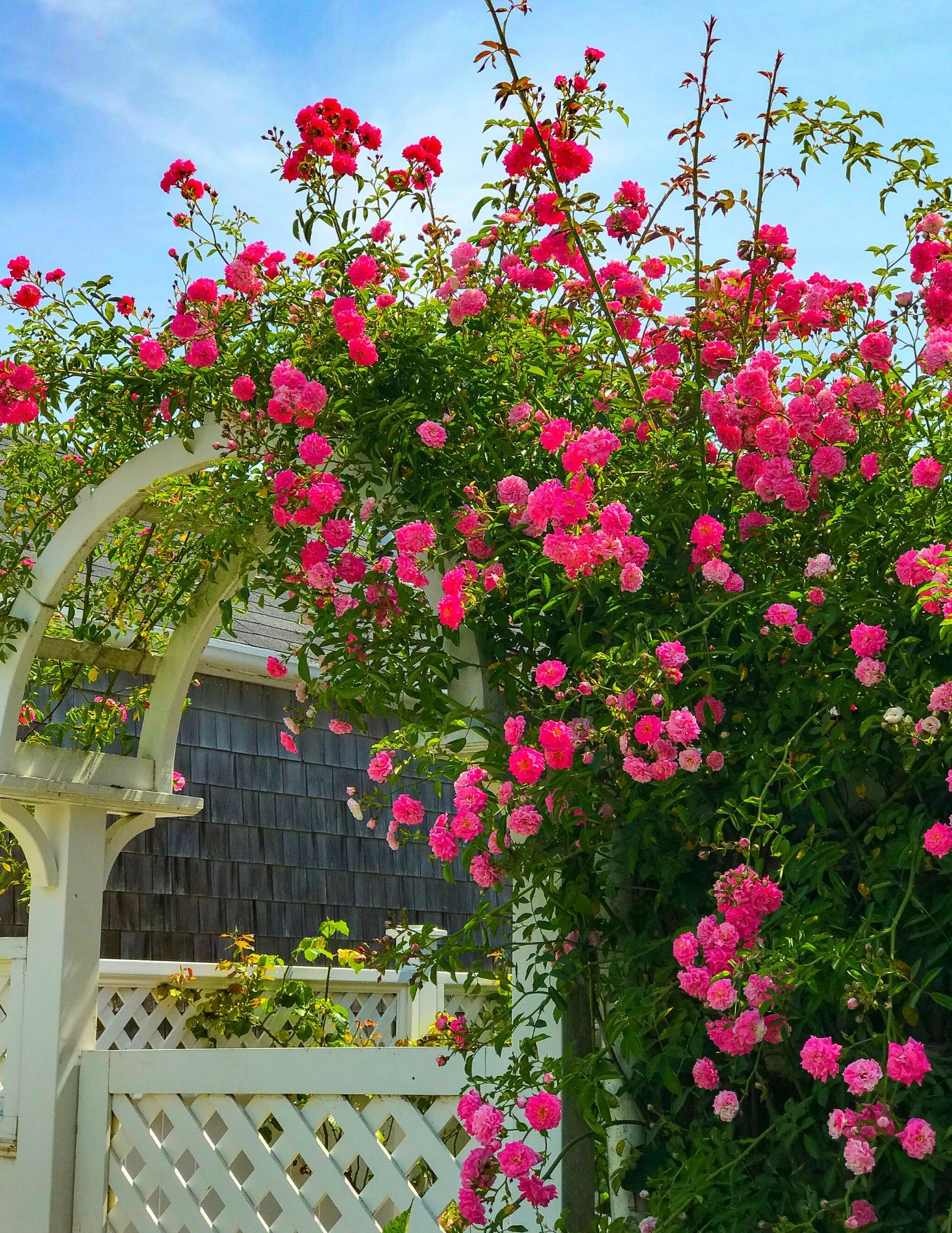 Nantucket Rose Covered Cottages in Sconset-11