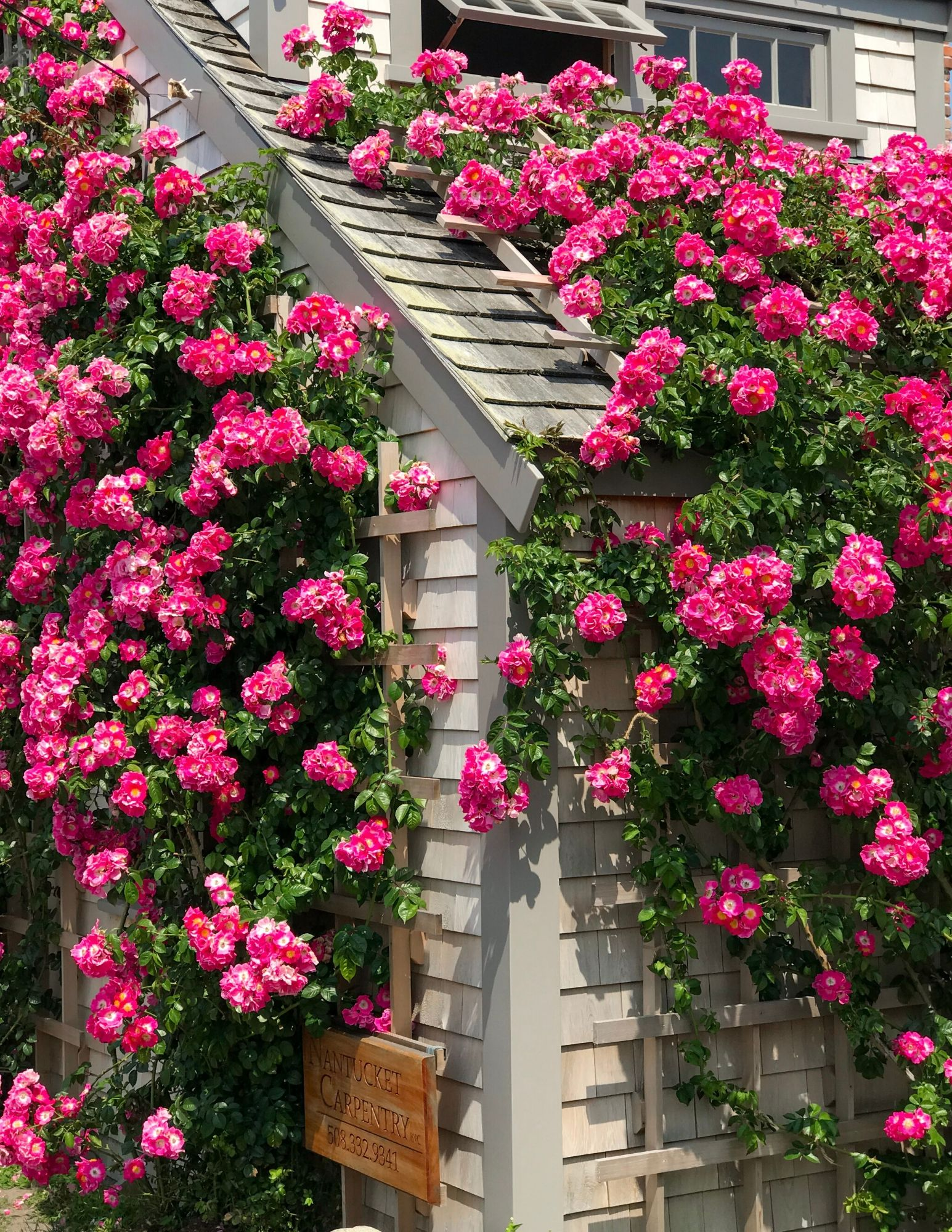 Nantucket Rose Covered Cottages in Sconset-14