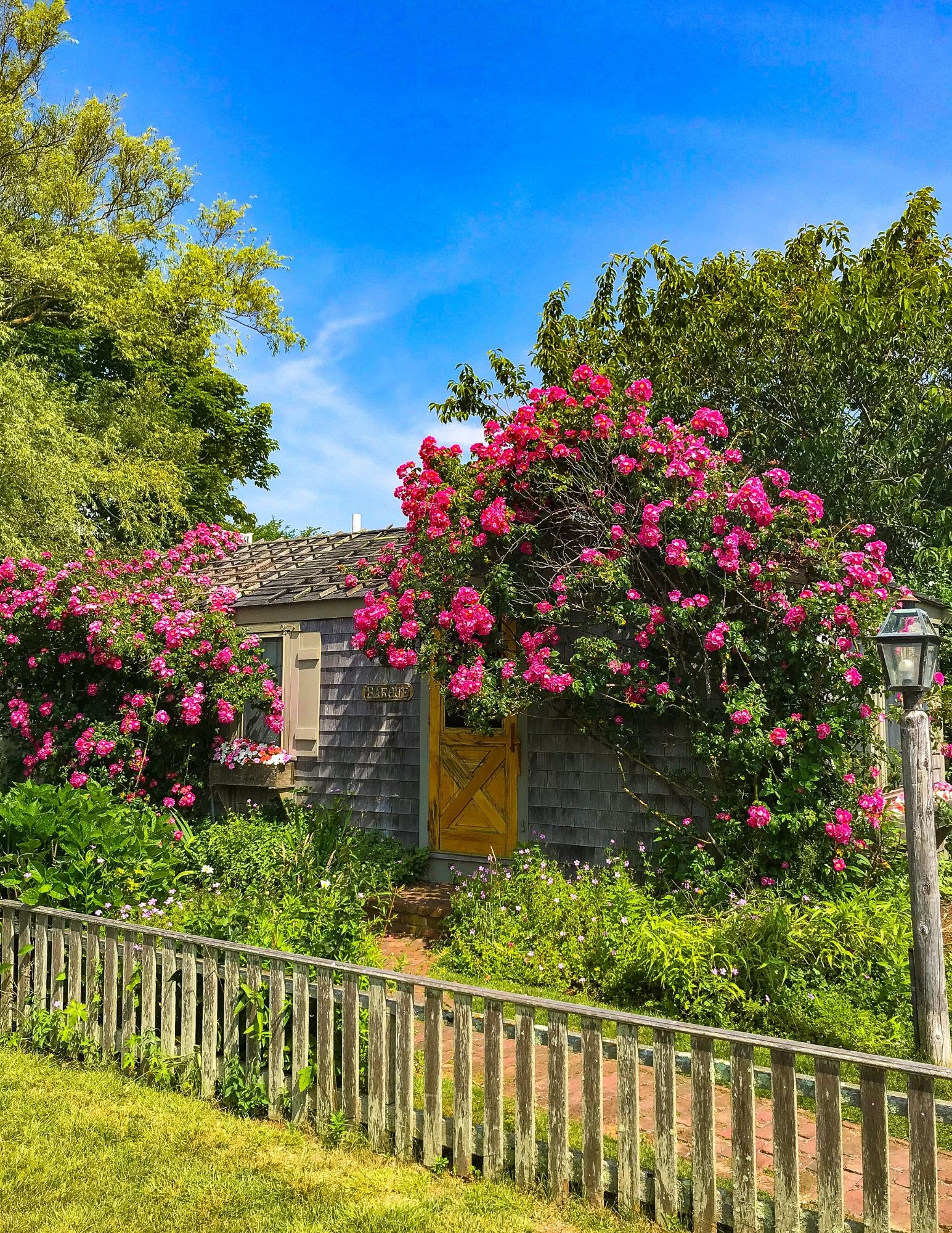 Nantucket Rose Covered Cottages in Sconset-23