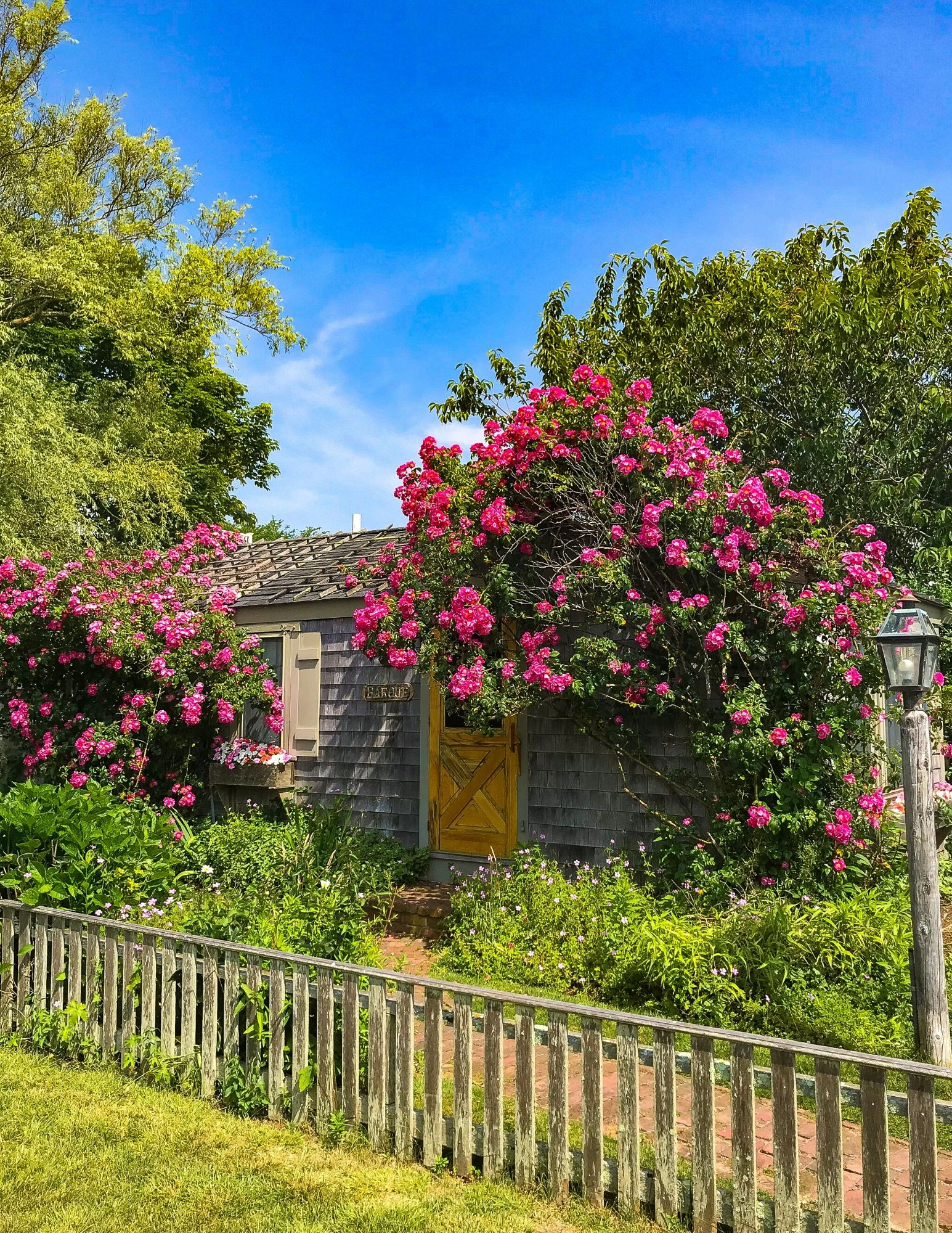 Nantucket Rose Covered Cottages in Sconset-4