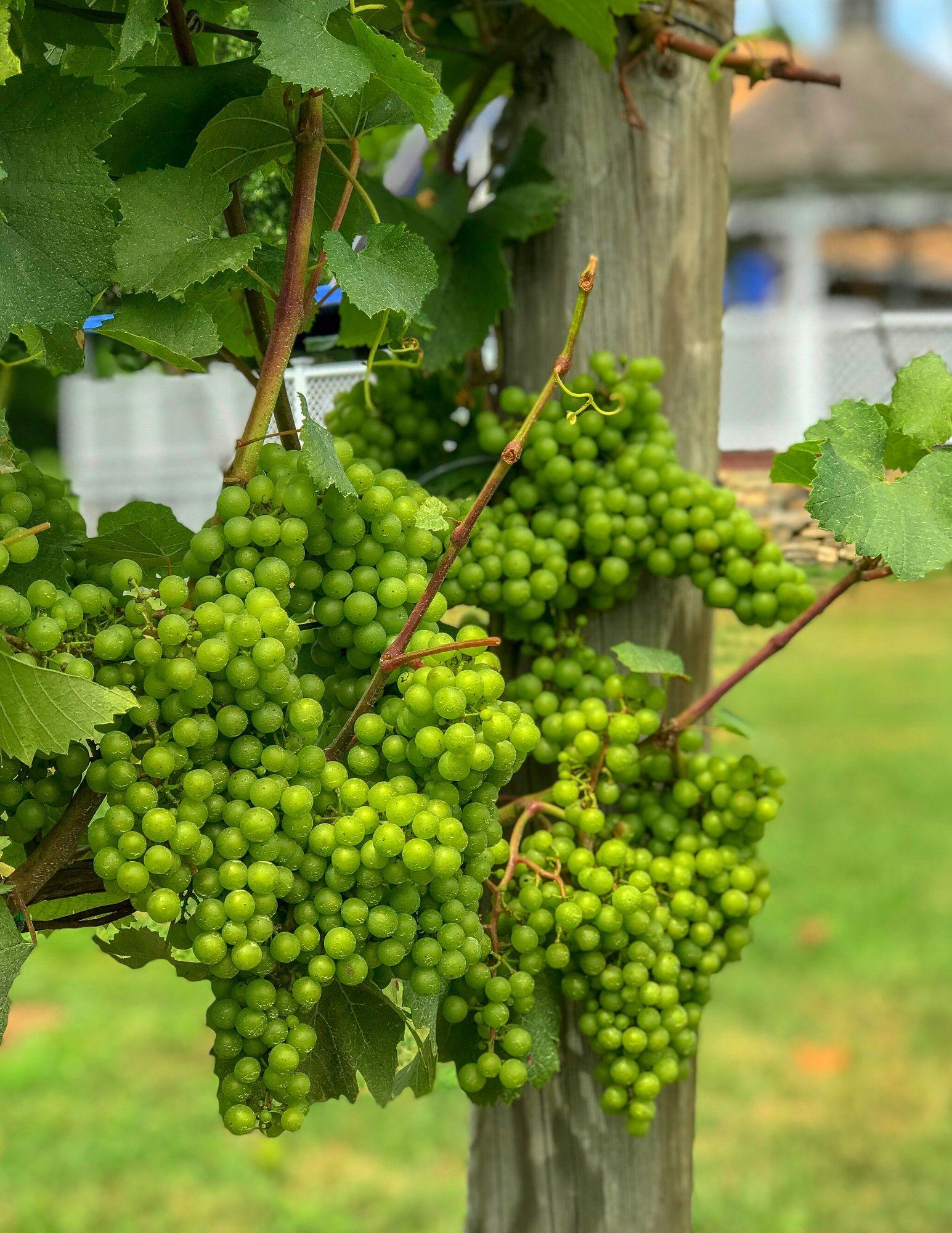 Stonington Vineyards CT Wine Trail-4