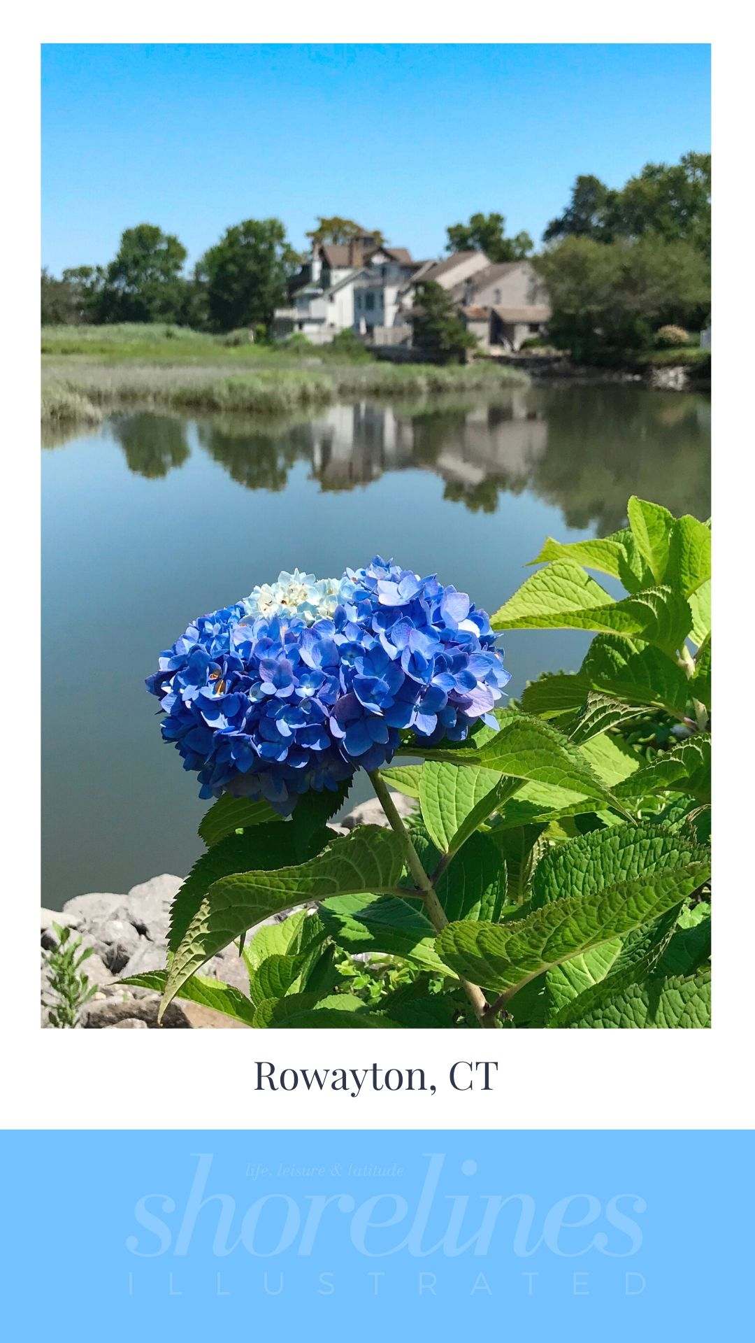 Blue Hydrangeas of New England-16