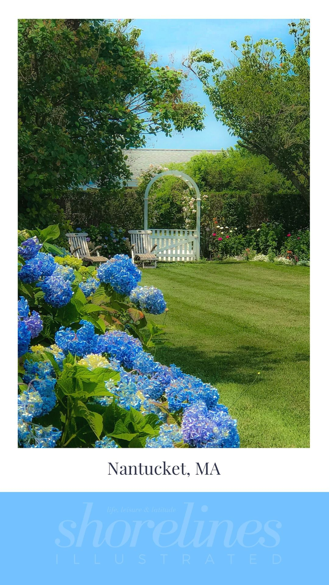 Blue Hydrangeas of New England-18