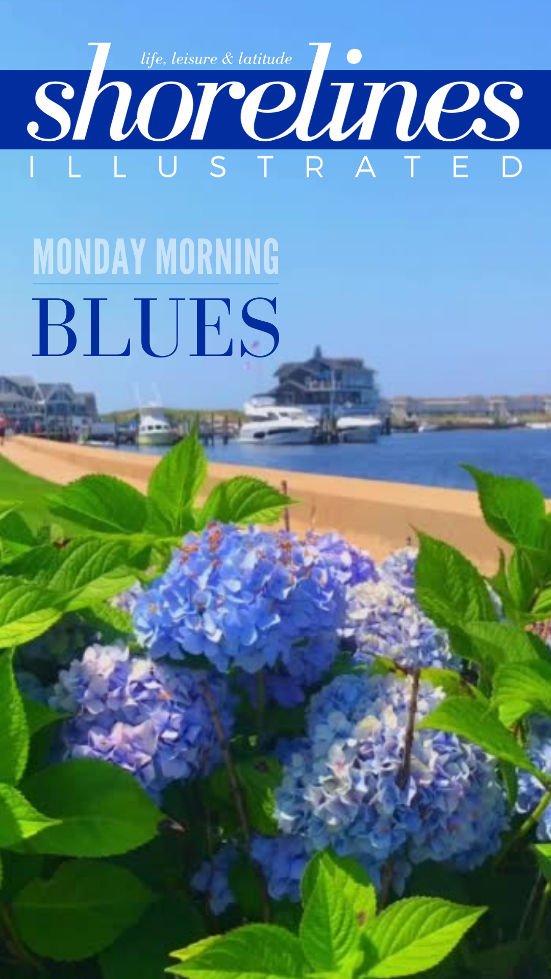 Blue_Hydrangeas_New_England