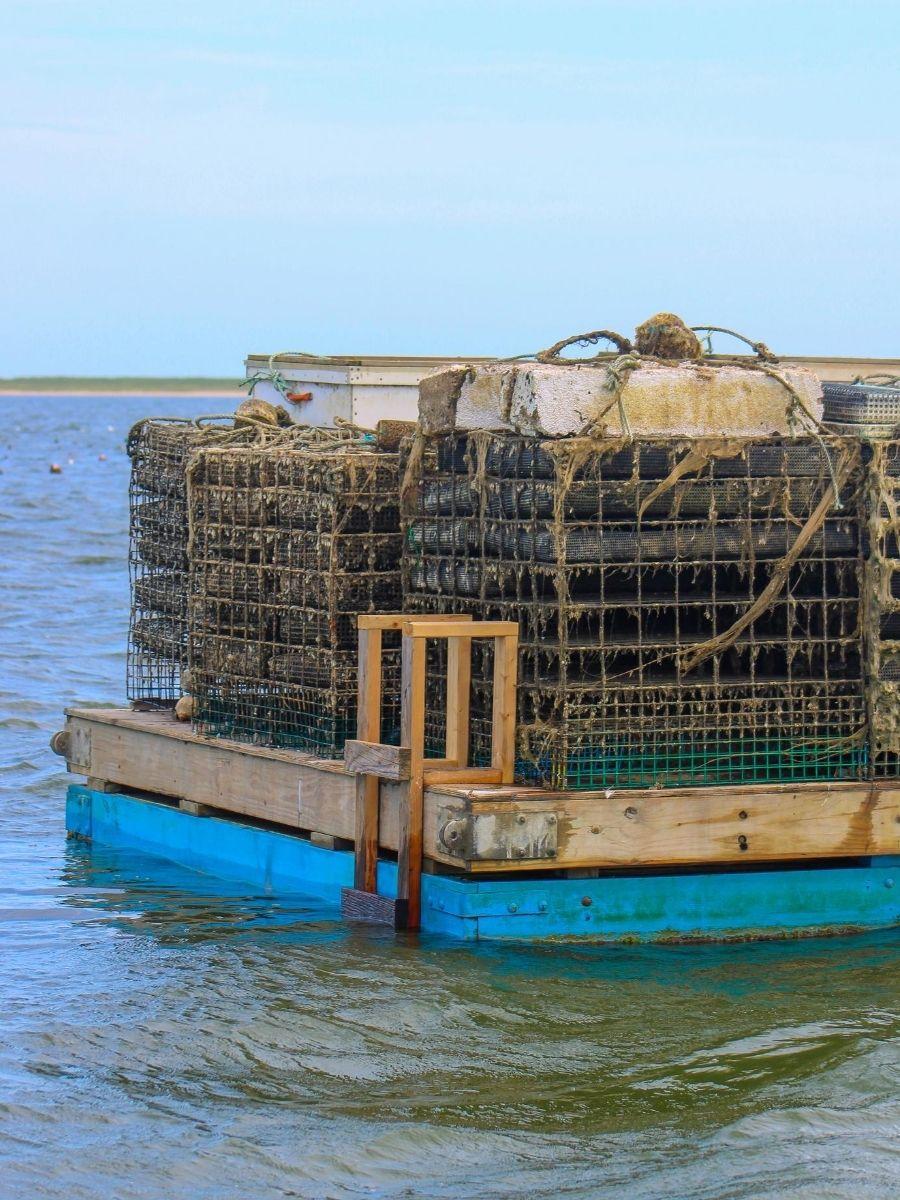 Signature-Oyster-Farm-Tour-Katama-Bay-Oysters-Marthas-Vineyard-10