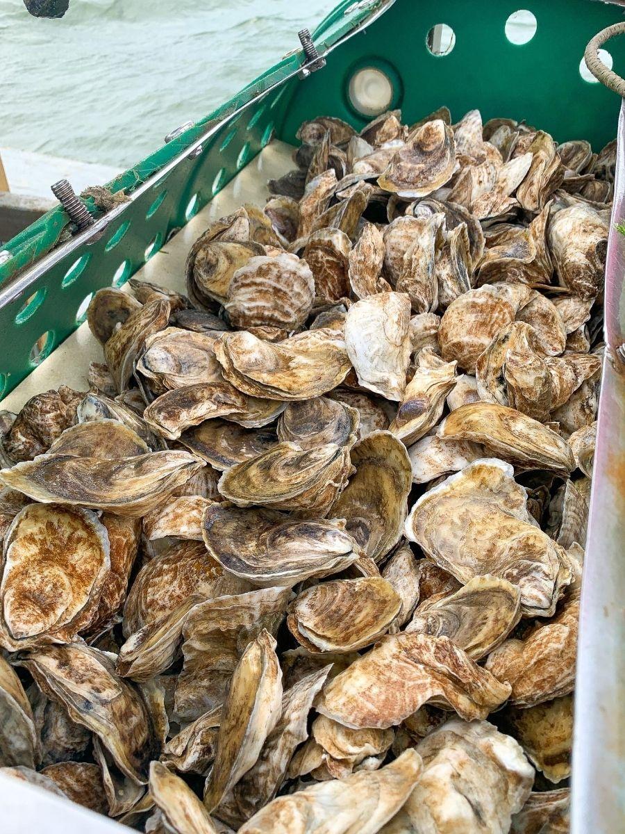 Signature-Oyster-Farm-Tour-Katama-Bay-Oysters-Marthas-Vineyard-12