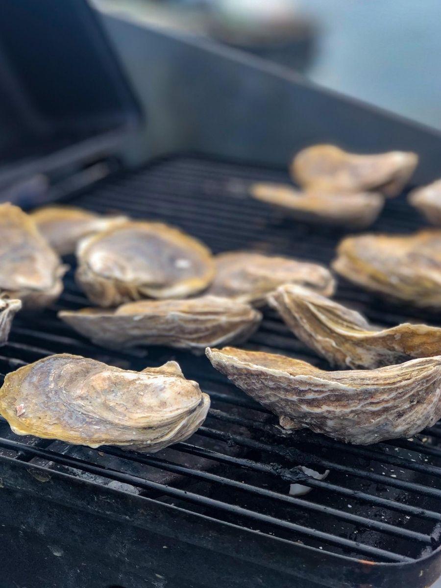 Signature-Oyster-Farm-Tour-Katama-Bay-Oysters-Marthas-Vineyard-14