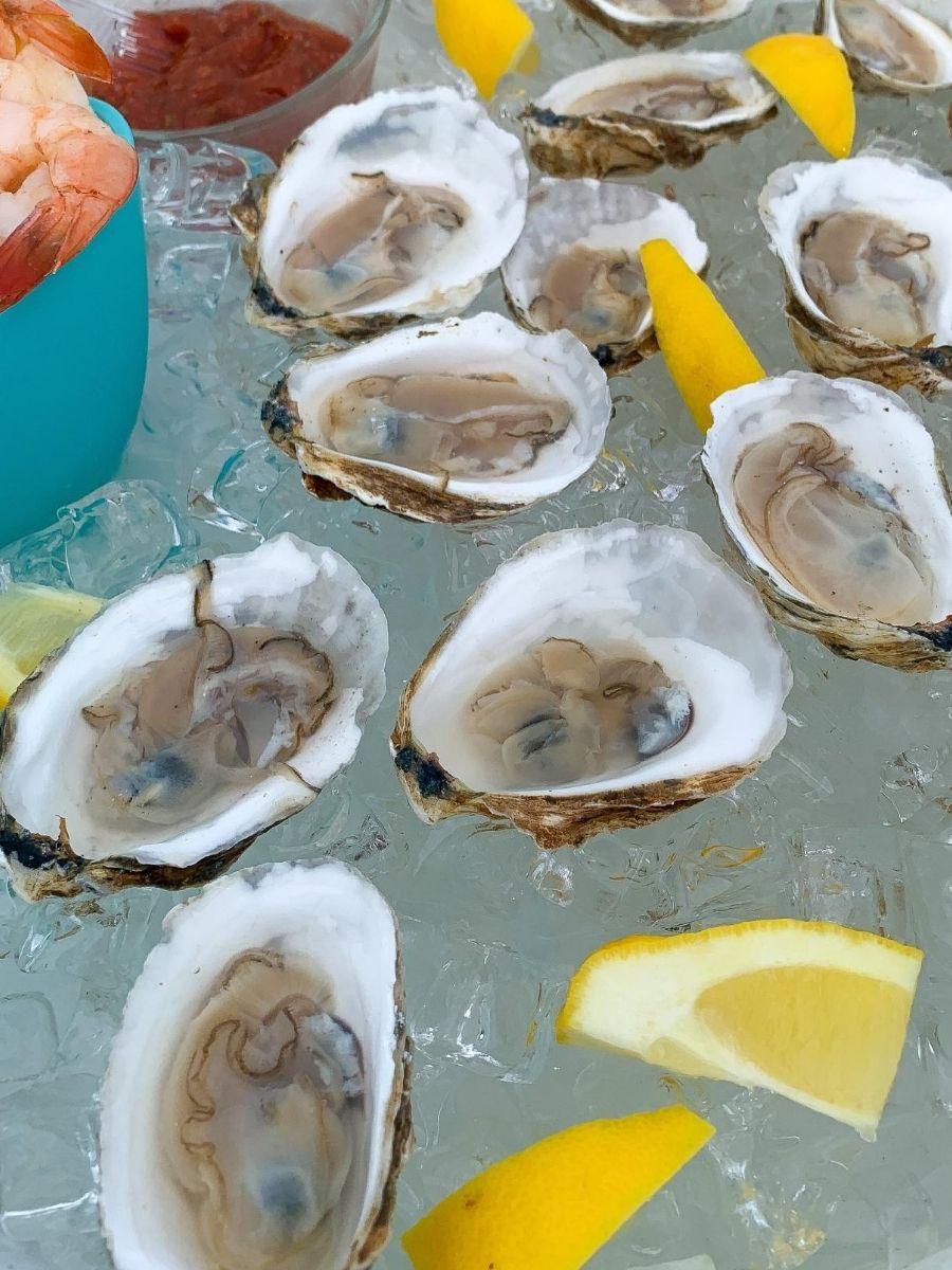 Signature-Oyster-Farm-Tour-Katama-Bay-Oysters-Marthas-Vineyard-15