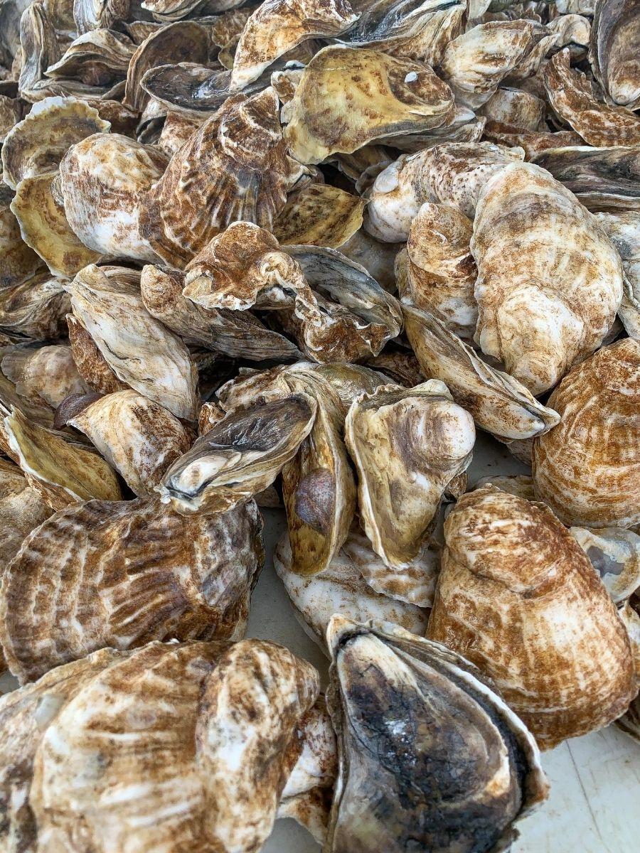 Signature-Oyster-Farm-Tour-Katama-Bay-Oysters-Marthas-Vineyard-5