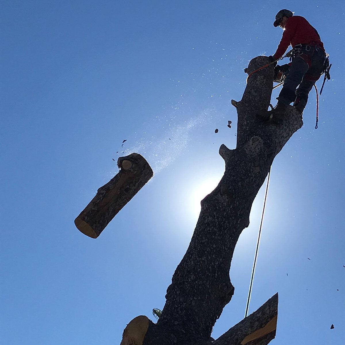 tree-cut