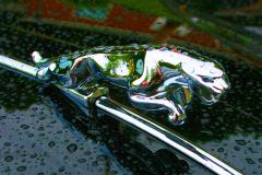 Watts 3D Car Art | Jaguar #7