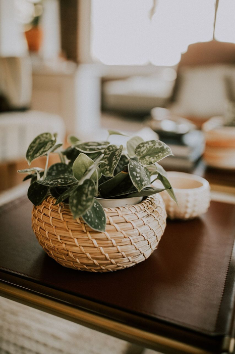 potted indoor plant inside woven basket coffee table 54545