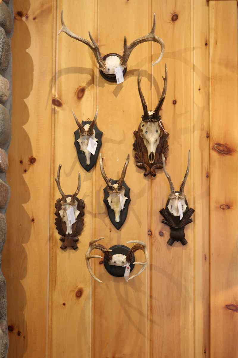 northwoods wi 54545 wall decor antlers lakeside living cabin