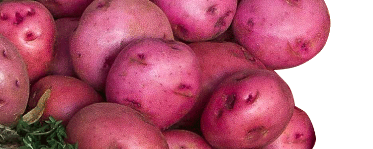 Zuckerman Red Potatoes
