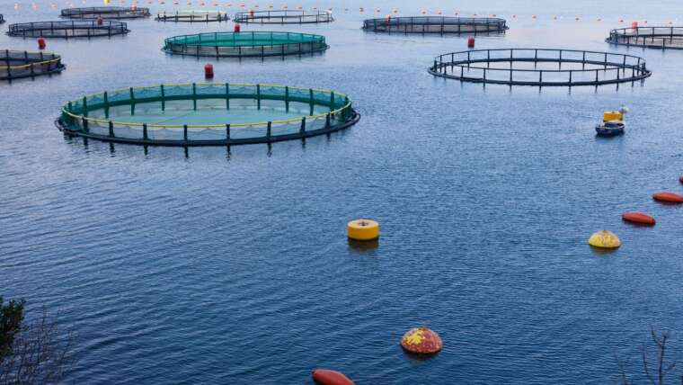 New Environmental Regulations for Commercial Fishing and Aquaculture