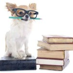 chihuahua and books