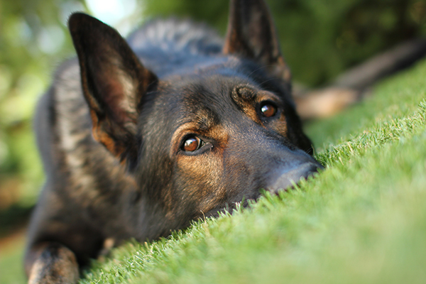 ENLISTED TO ENTREPRENEUR – Business Ideas for Pet Lovers
