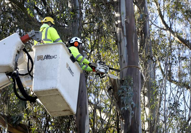 County Notice about Edison and Tree Trimming