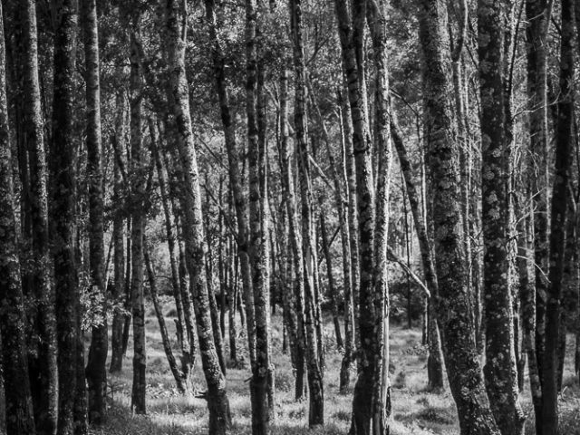 When to Use Black and White ~ The Woods for the Trees