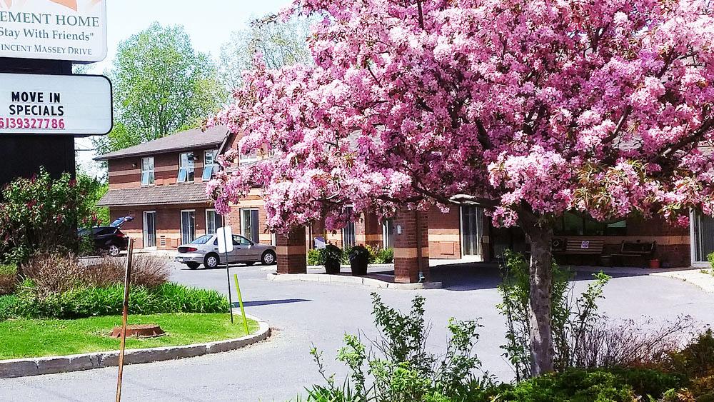 pinktree1
