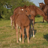 Mate Little Cokette x Copy Cat Filly3