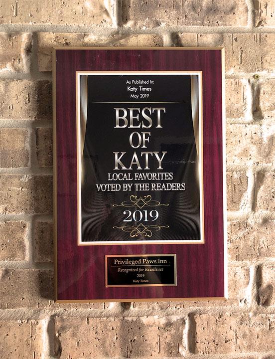Best of Katy 2019