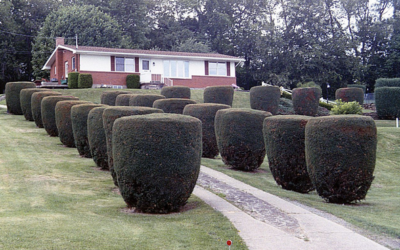 There are Better Ways to Prune Your Bushes