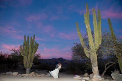 Wedding Photography   Steven Palm Photography-41