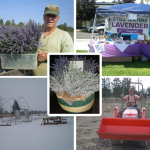 Still Waters Lavender, LLC