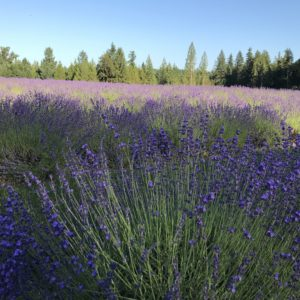 EAGLE CREEK LAVENDER