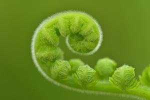 Fern on contact page