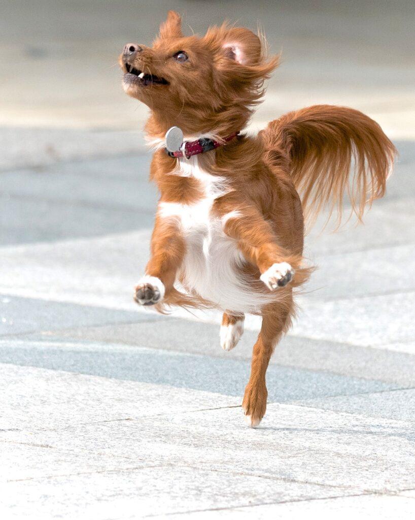 dog, action, pet