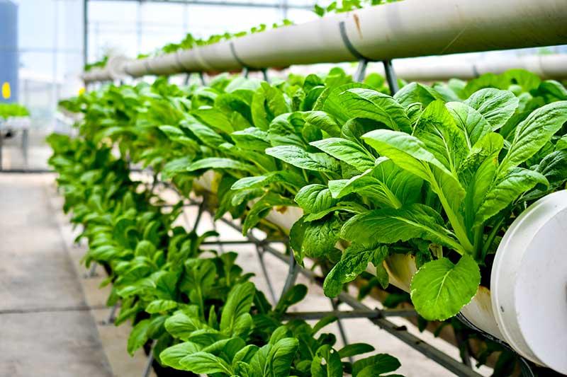 plants growing inside