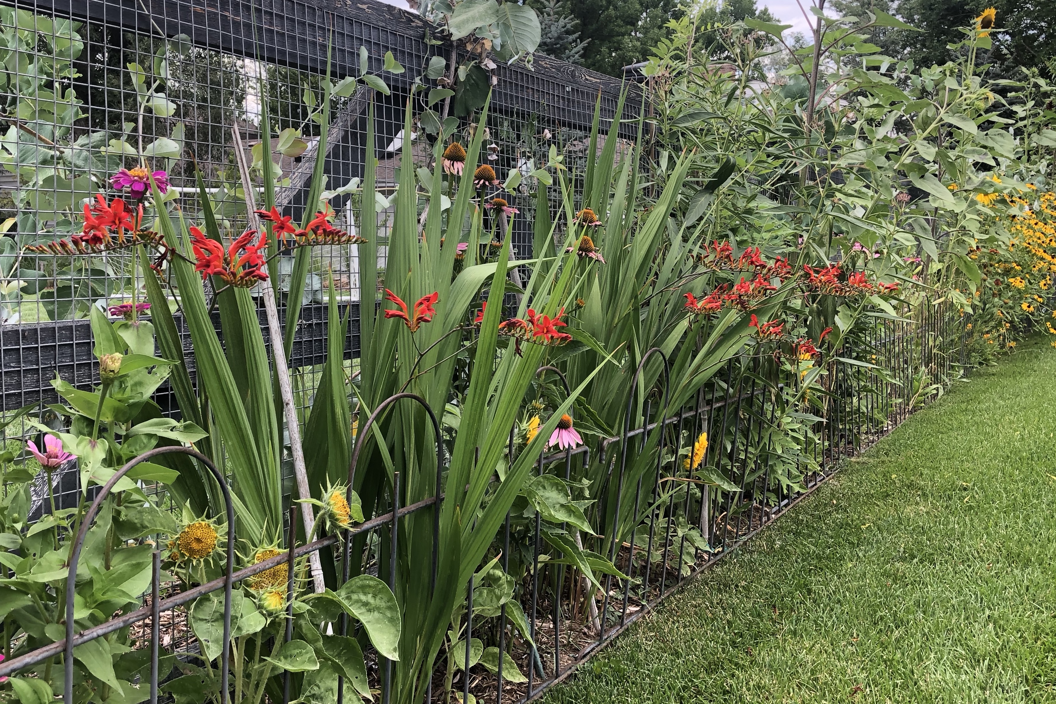 Mid-season Garden Tips
