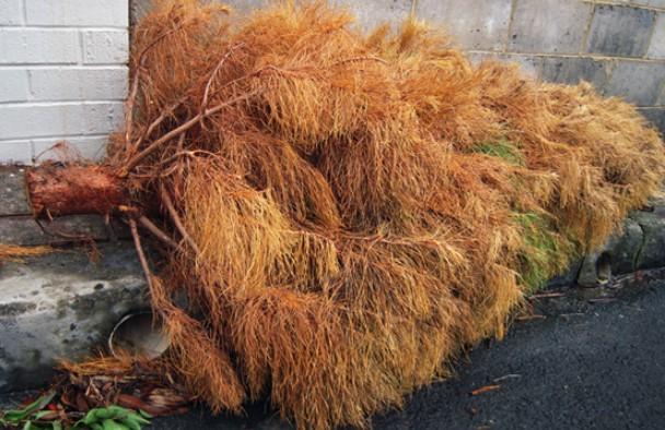 crazy customer return story dead christmas tree