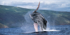 Pacific Whale Foundation Events for June 2013