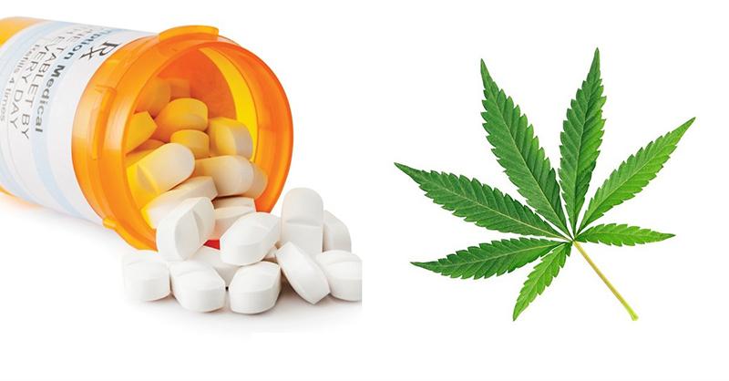 marijuana vs opioids