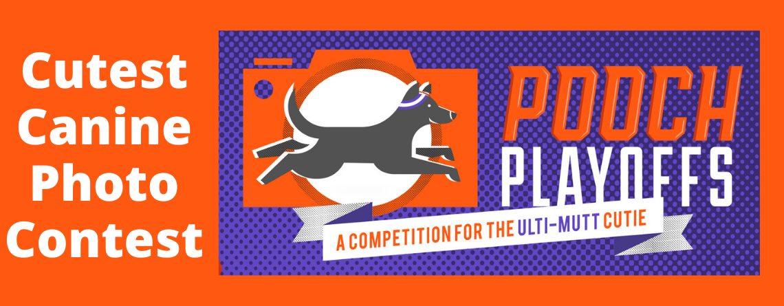 Cutest Canine Photo Contest