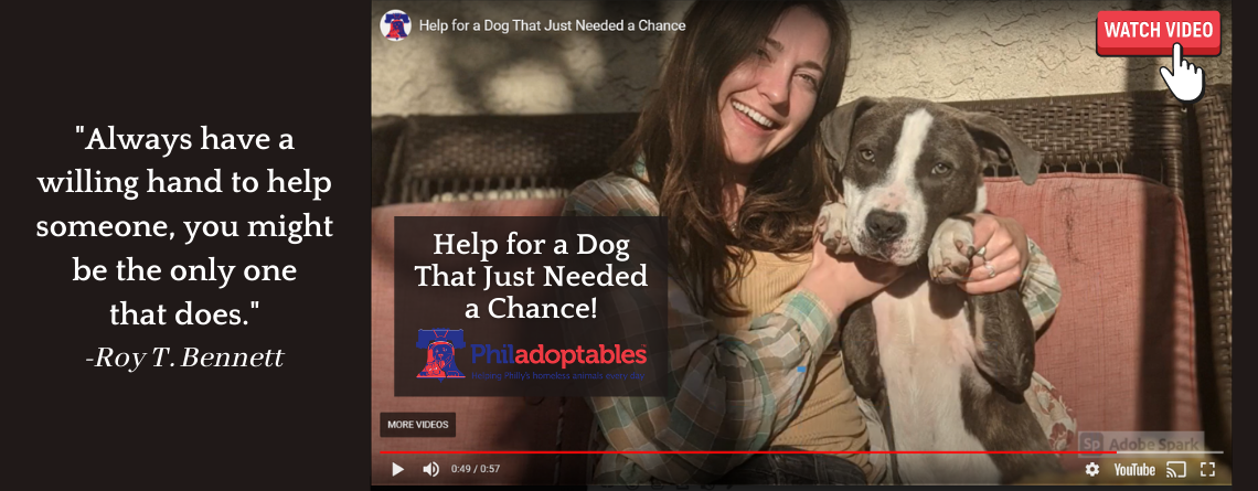 Help for a Dog That Just Needed a Chance!