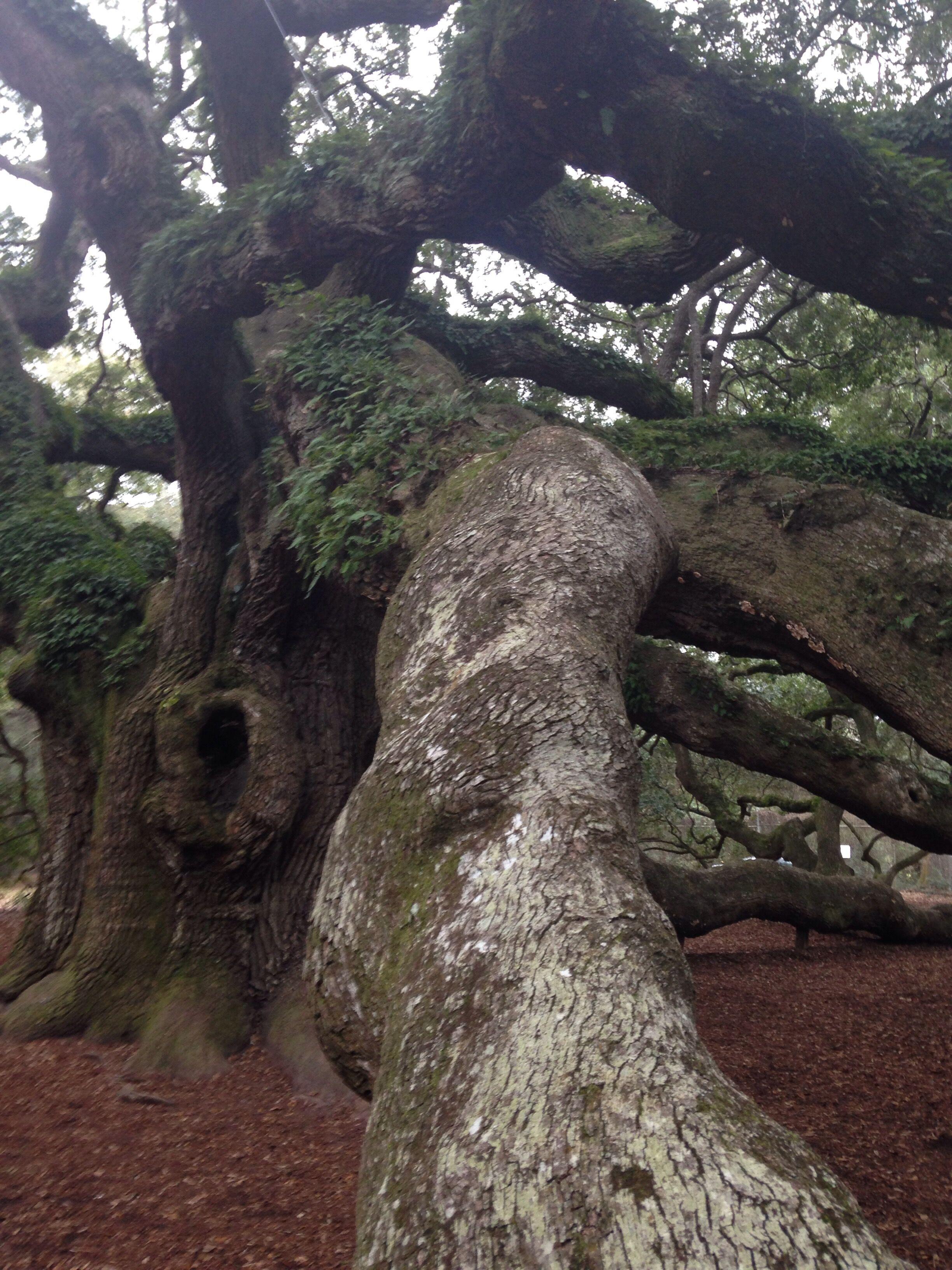 Charleston - Angel Tree