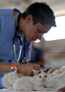 veterinary professional and kitten