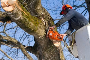 tree-trimmer-image
