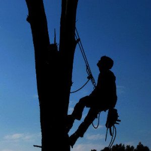 tree triming service whose bucket malfunctioned