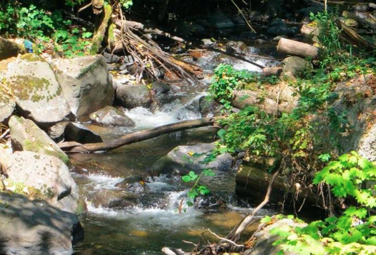 Bellevue Stream