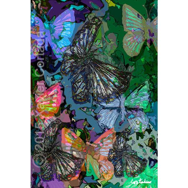 Miami Blue Butterflies