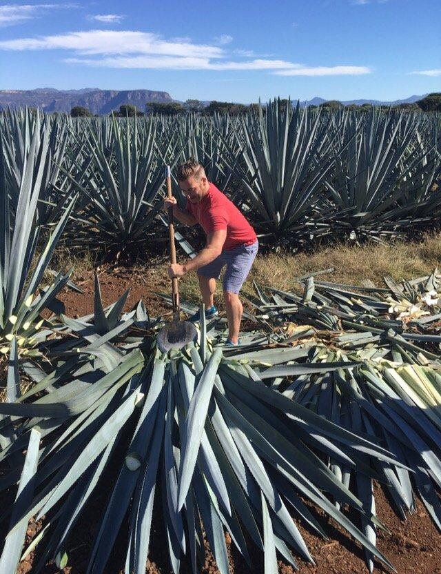 Tequila en México de Jalisco Mexico es Tequila