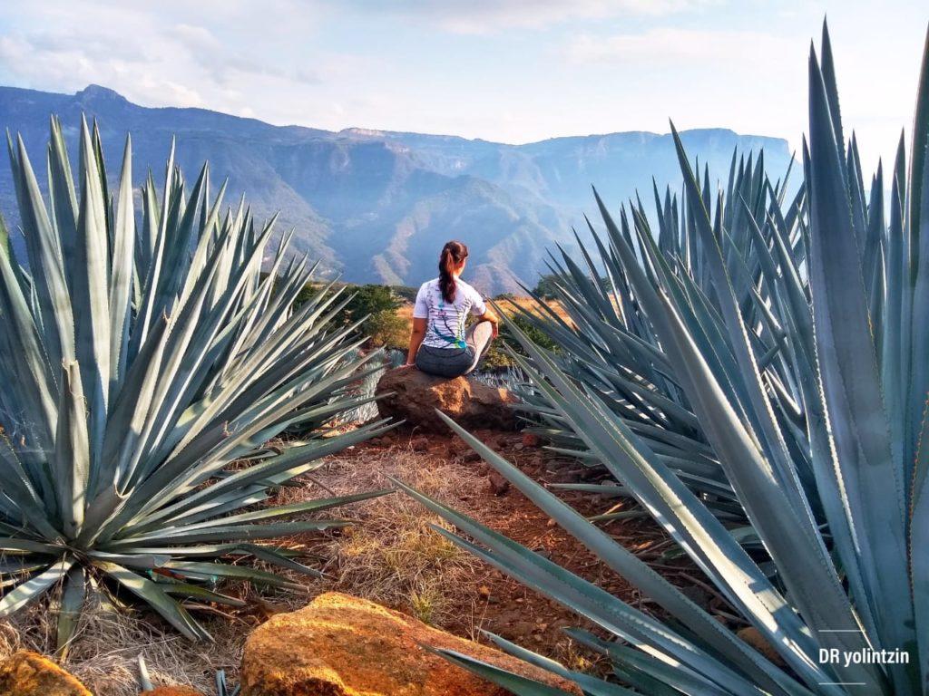 Que Hacer en Tequila Jalisco Maraton eventos deportivo 10 Carrera del Agave Ruta del Tequila Jalisco 2019 Actividades