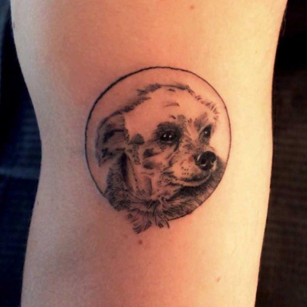 Dock: Micro Dog Portrait