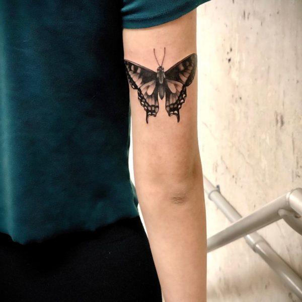 Zakk: Swallowtail Moth