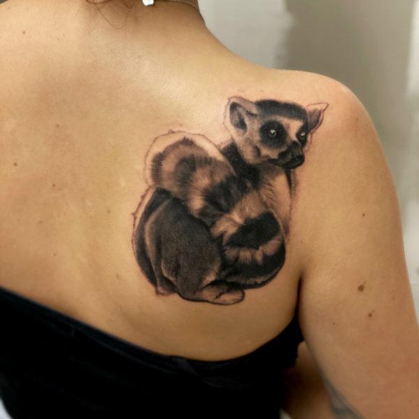 Leif: Ring tailed Lemur